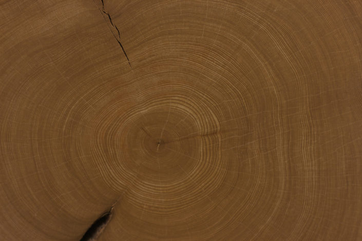 Tree rings can be used to learn about ancient climates. CC image courtesy of Marc Dominianni on Flickr.